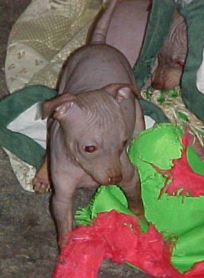 ruby at 8 weeks